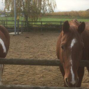 Impression Pferde Team