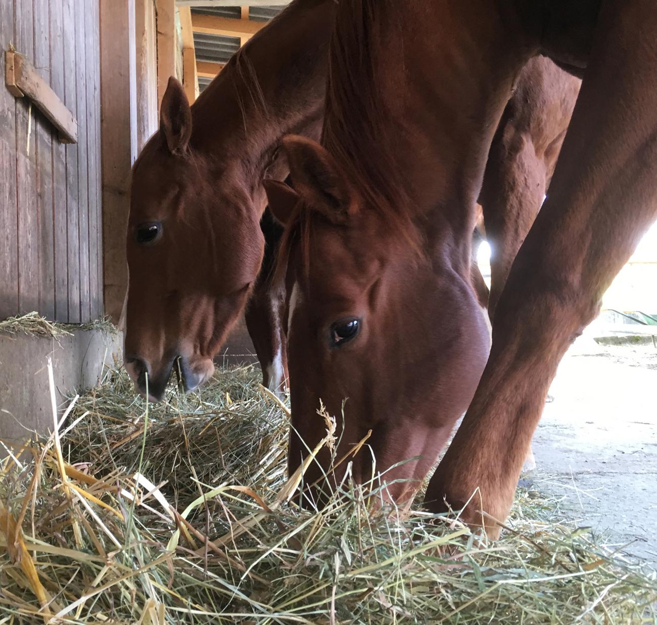 Impression Pferde am fressen