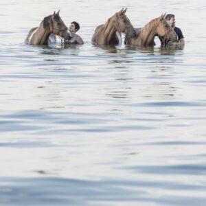 Uttwil, Thurgau, Schweiz, 22. August 2017 - Savvy Ranch, Martin und Gaby Mueller mit ihren Pferden im Bodensee, Wasser.